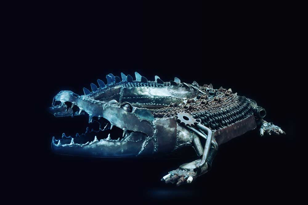 Saltwater Crocodile black background