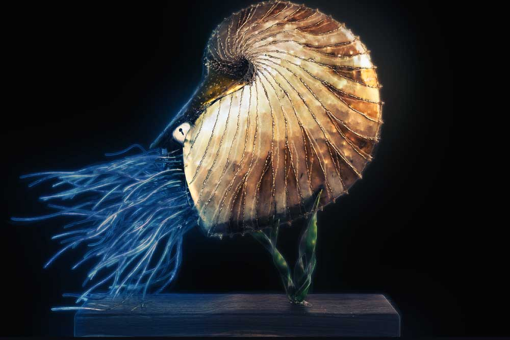 Sculpture Nautilus on timber stand black background