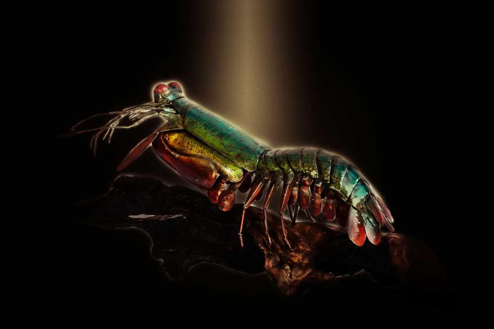 Metal Sculpture Mantis Shrimp